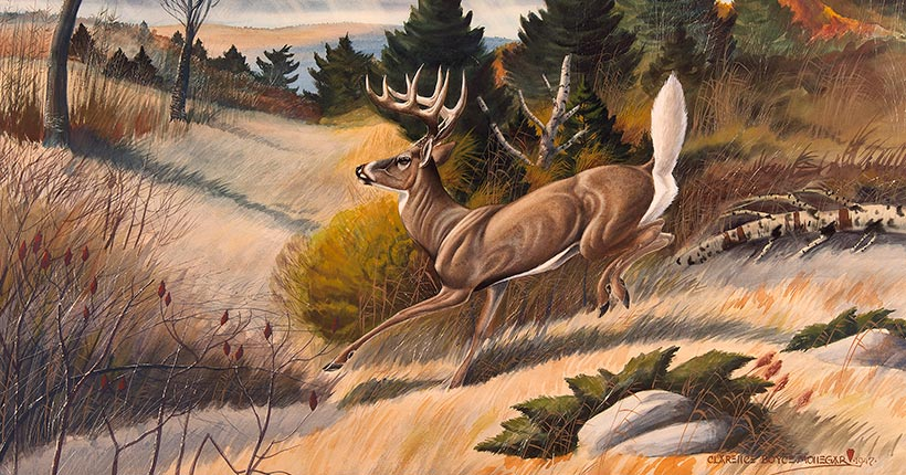 Deer jumping in a field
