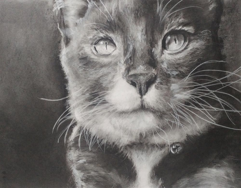 Black and white sketch of a cat with a bell around its neck