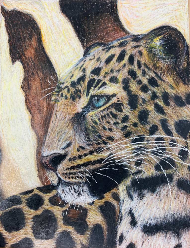 Close up illustration of a cheetah from the neck up