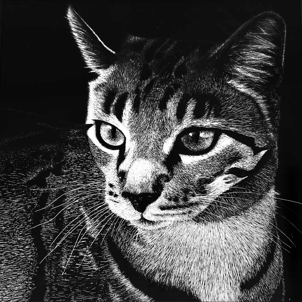 Black and white sketch of a cat