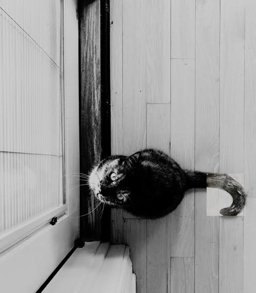 A cat looking up at the camera while in front of a door