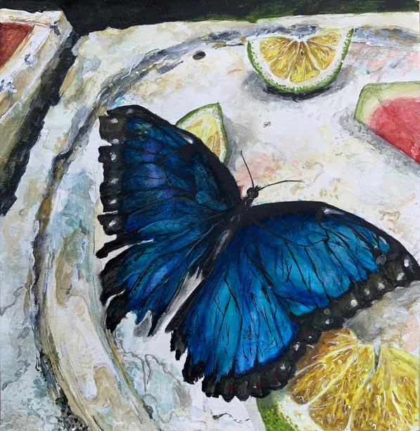 Blue butterfly sitting on a plate with leftover watermelon and lime pieces