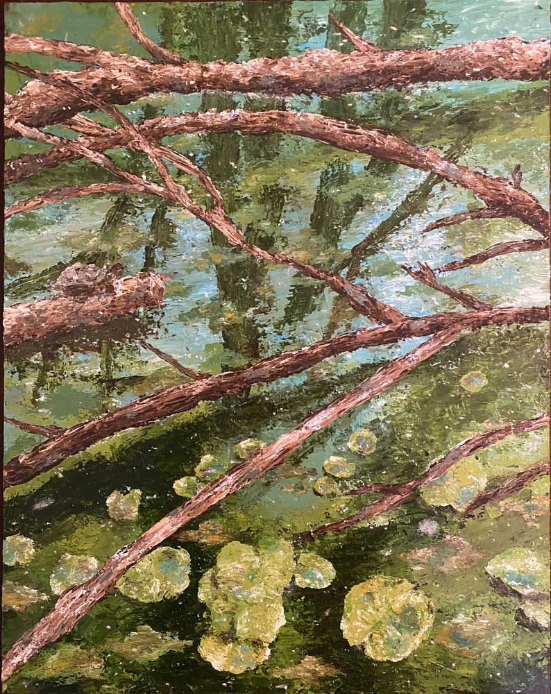 Branches laying on top of a river with lily pads