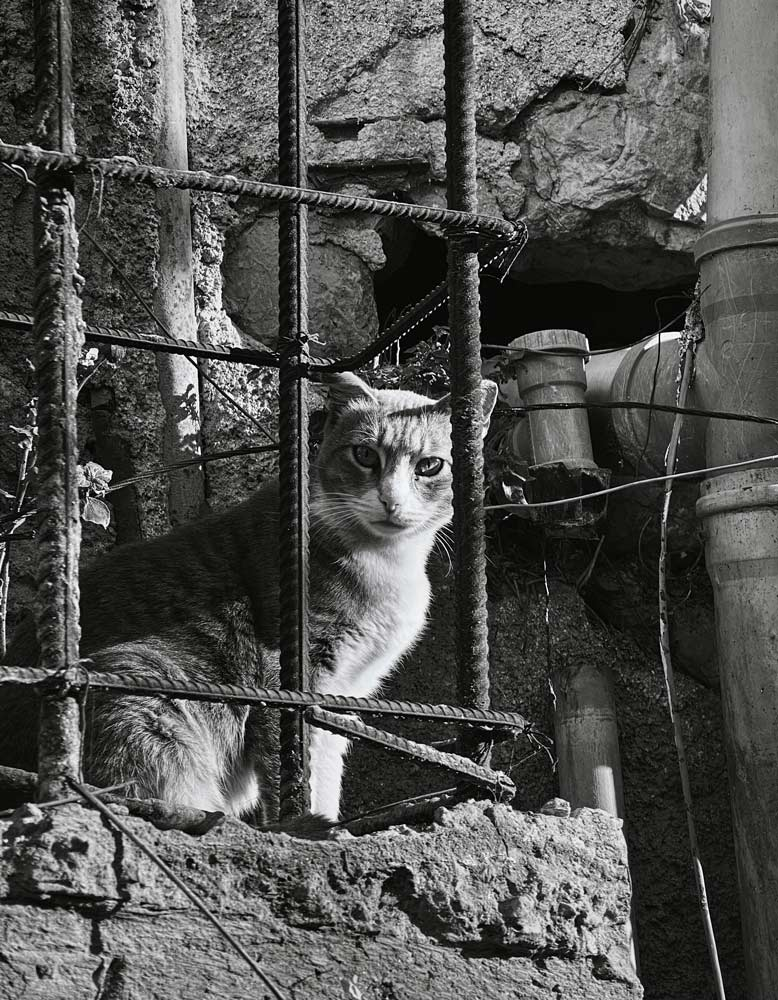 Cat looking out through a metal cage