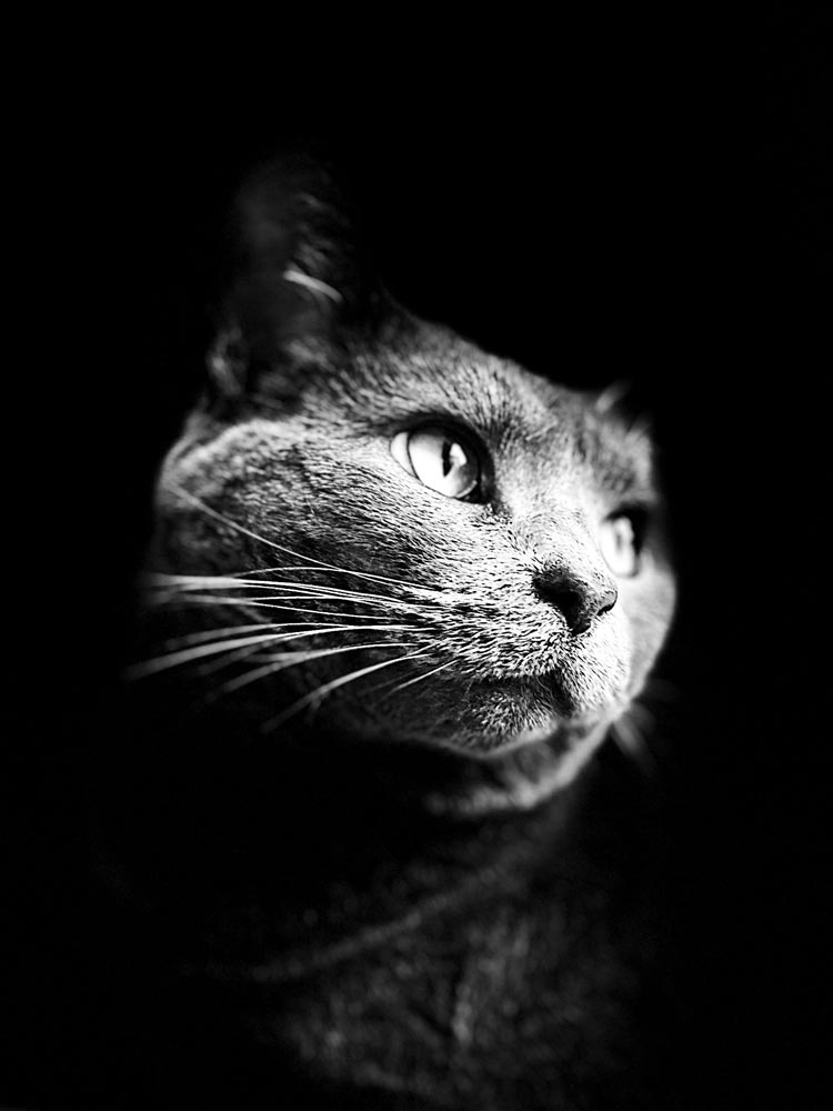 Solid black background with a cat looking off to the side