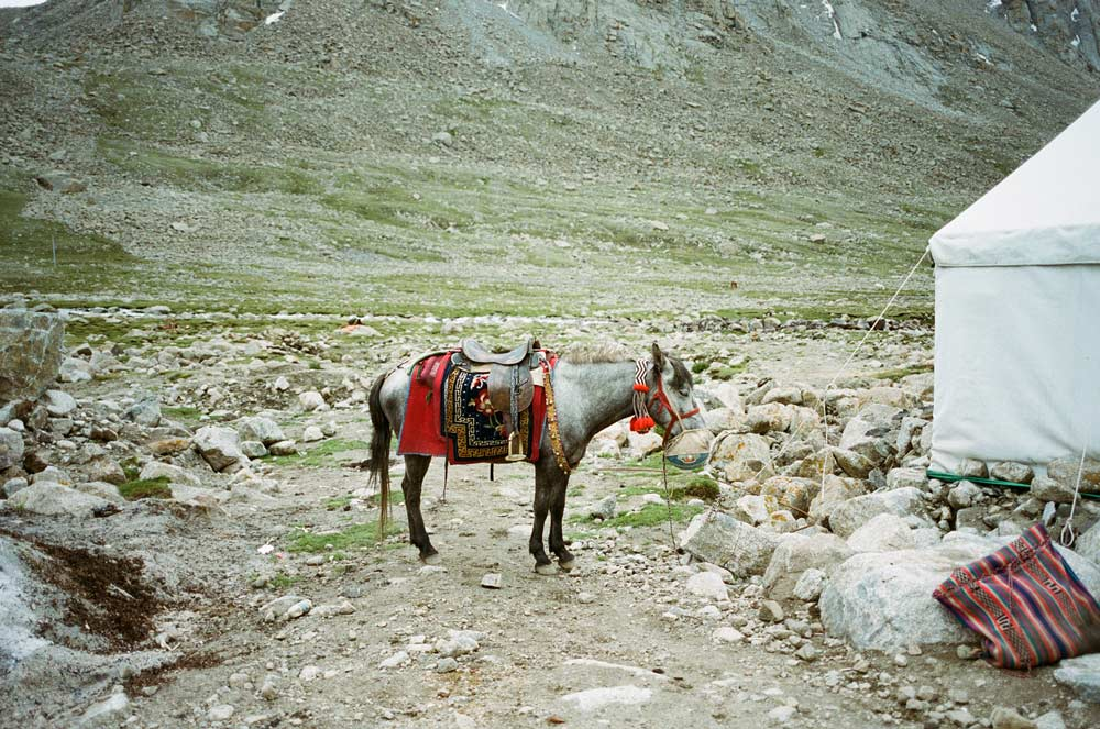 Donkey standing on gravel next to a white tent