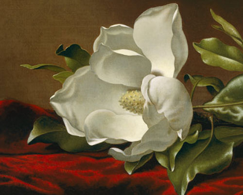 Image from Nature and Opulence: The Art of Martin Johnson Heade