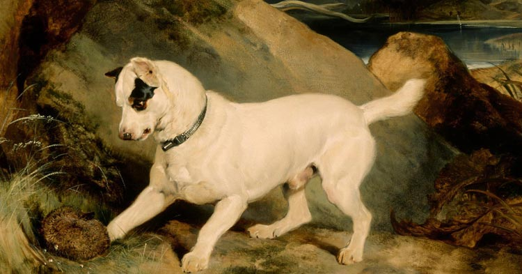 Artwork: Edwin Landseer, Portrait of a Terrier, The Property of Owen Williams, ESQ., M.P. (Jocko with a Hedgehog)